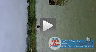 bote punta roma alimentando peces